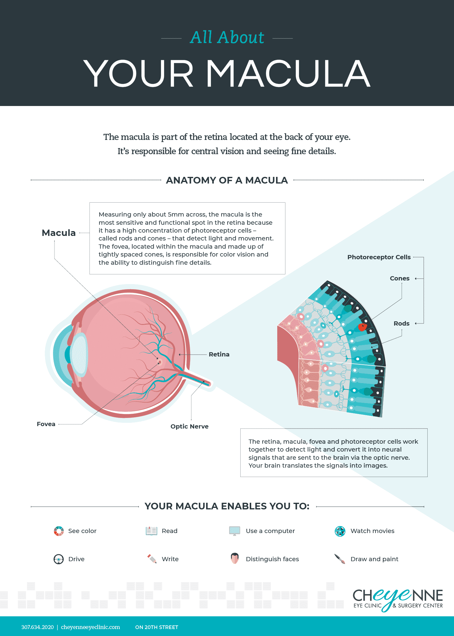 all about your macula infographic